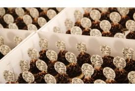 Mini Cupcakes Tradicional CUP49
